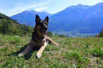 Ferienwohnung mit Hund im Wallis